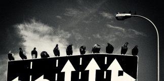 palomas encima de unas señales de direccion de una ciudad