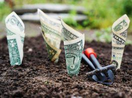 billetes de dolar enrollados en forma de cono metidos en la tierra de un huerto